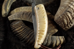 Piémontais-corne-de-Bélier-3